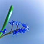 floricele-4
